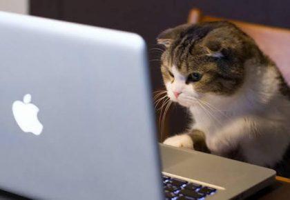 Online Eğitimlerde Yaşanan Birbirinden Garip ve Komik Durumlar